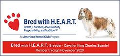 CKCS_BWH_breeder