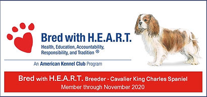 CKCS_Bred with heart banner