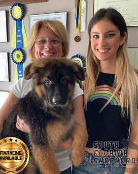 South Florida German Shepherd customers_