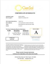 Groovy Flowers City DM certificate