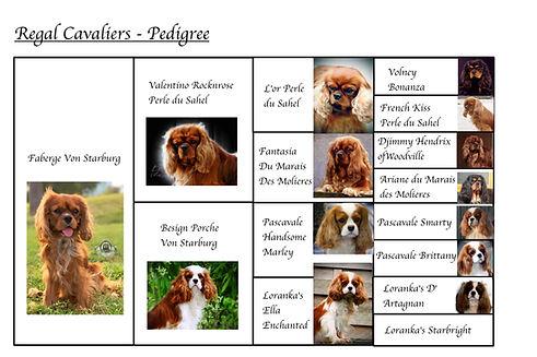 paberge pedigree.jpg