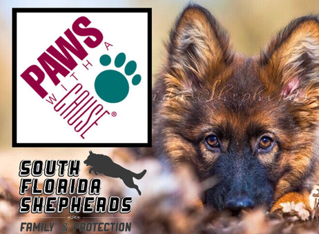 Paws With A Cause Fundraiser