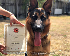 Dog training, canine good citizen, akc, miami florida, south florida german shepherds