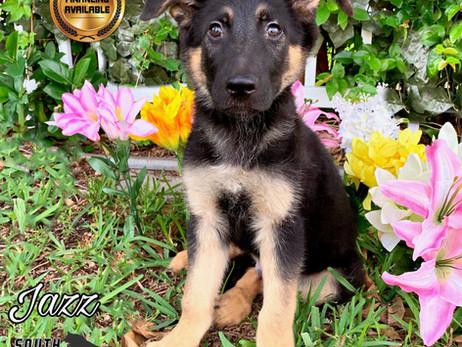 The New German Shepherd Puppy Checklist