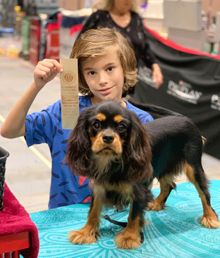 Cavaliers King Charles Spaniel breeder W