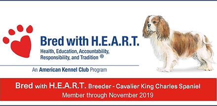 AKC Bred with Heart Cavalier King Charle