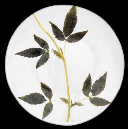 Assiette Drachocephalum - JOHN DERIAN
