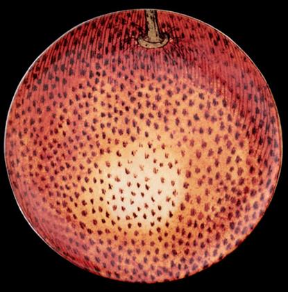 Assiette Plate Orange Pomme - JOHN DERIAN