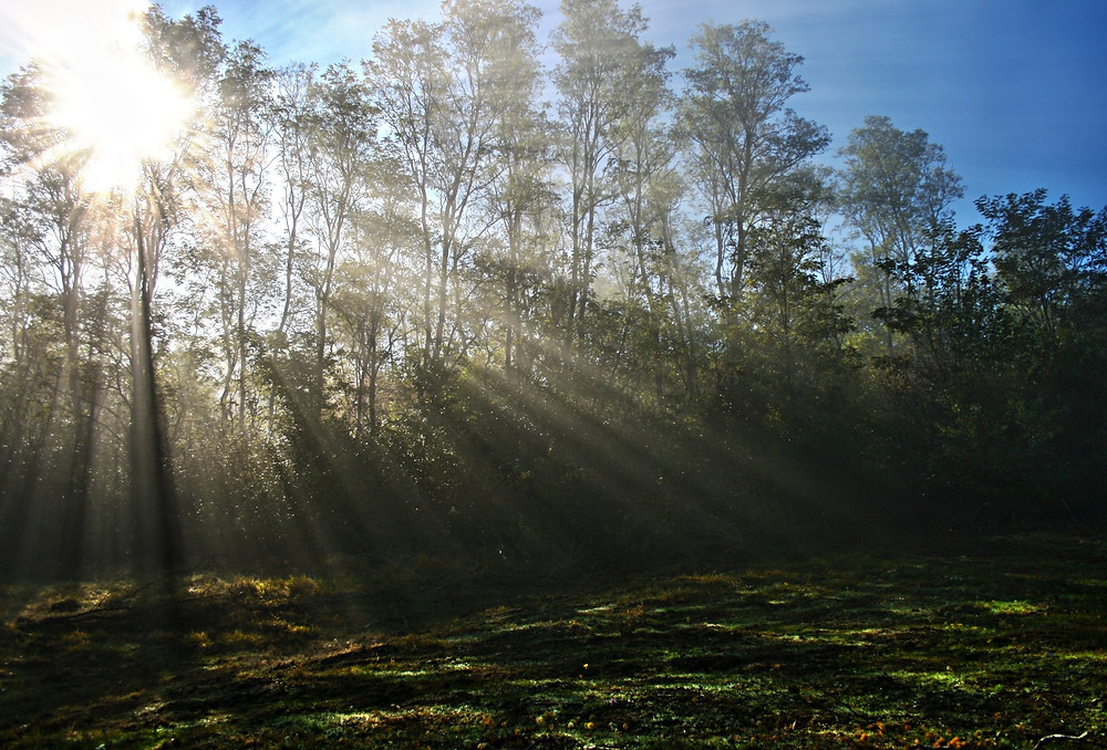 light, trees, sunbeams, forest, shadows, sun, sunshine