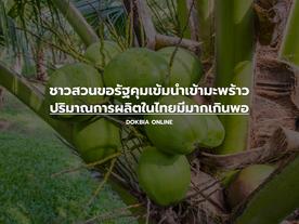 ชาวสวนขอรัฐคุมเข้มนำเข้ามะพร้าว ปริมาณการผลิตในไทยมีมากเกินพอ
