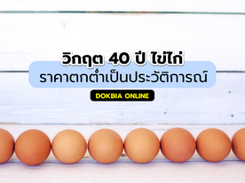 วิกฤต 40 ปี ไข่ไก่...ราคาตกต่ำเป็นประวัติการณ์