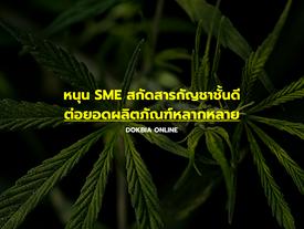 หนุน SME สกัดสารกัญชาชั้นดี ต่อยอดผลิตภัณฑ์หลากหลาย