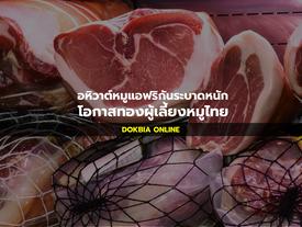 อหิวาต์หมูระบาดหนัก โอกาสทองผู้เลี้ยงหมูไทย