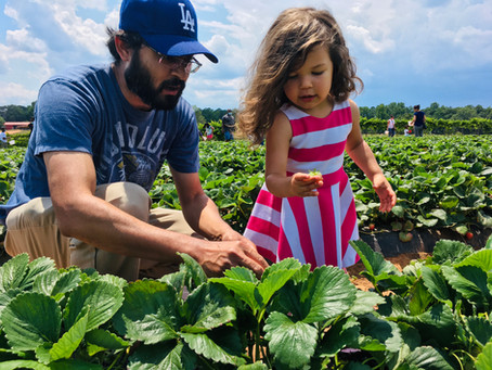 Strawberry Picking: A Great Pick Me Up