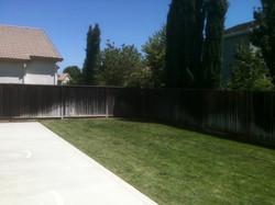 Backyard New.jpg
