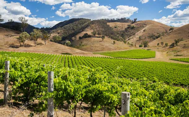 Rolling vineyards in the picturesque wine region of Mudgee, NSW