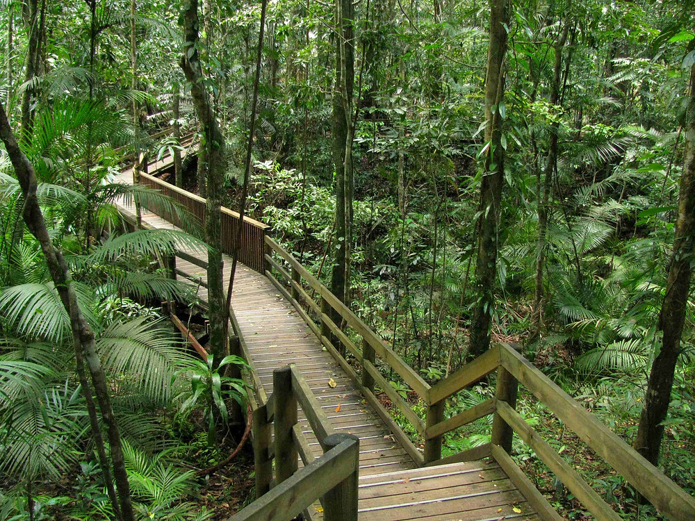 Australia can also lay claim to the oldest living tropical rainforest on earth - the Daintree