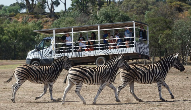 At Werribee Open Range Zoo you and your brood can blink and pretend you're on the edge of the African savannah