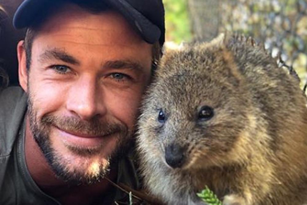 Chris Hemsworth's selfie with a Rottnest Island quokka in  Western Australia went viral