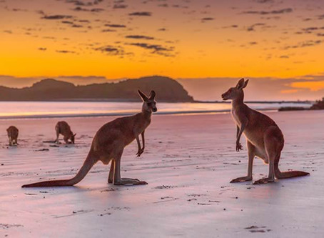 Only in Australia - 17 Travel Experiences You Can't Have Anywhere Else