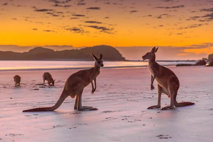 Totally unique - these Australian travel experiences are worth staying home for