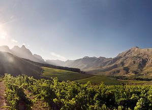 Meet the Wine Advisors - Reese from Abu Camp