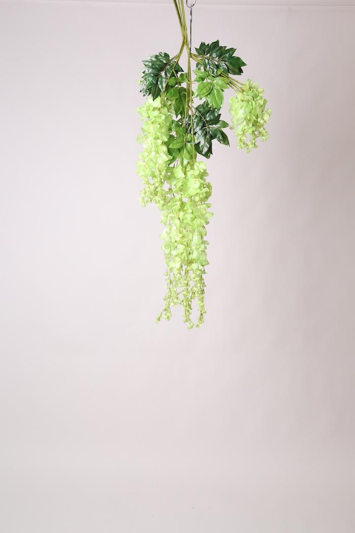 Wisteria Green