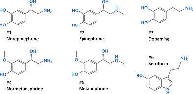 Norepinephrine, Epinephrine, Dopamine, Normetanephrine, Metanephrine, Serotonin