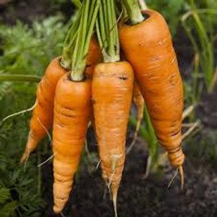 Carrot, Danvers