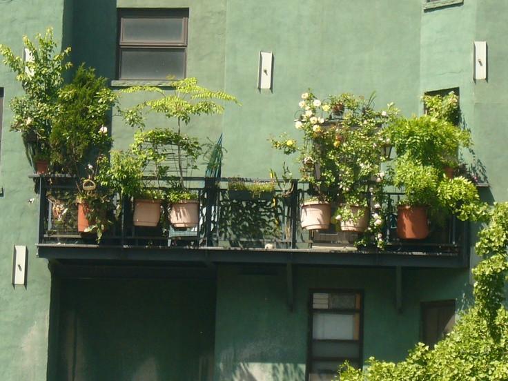 Image result for fire escape garden