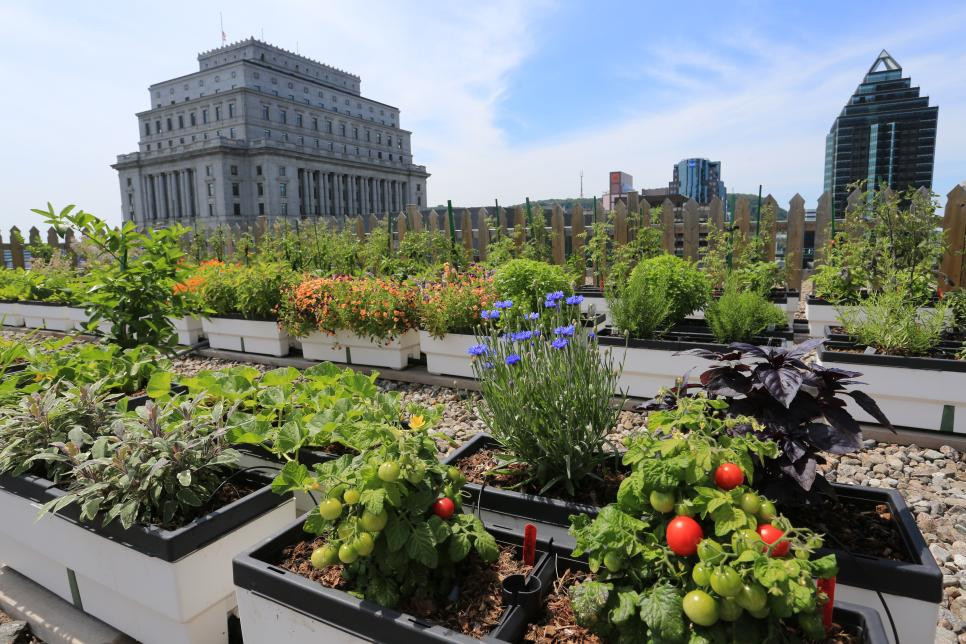 Image result for rooftop garden