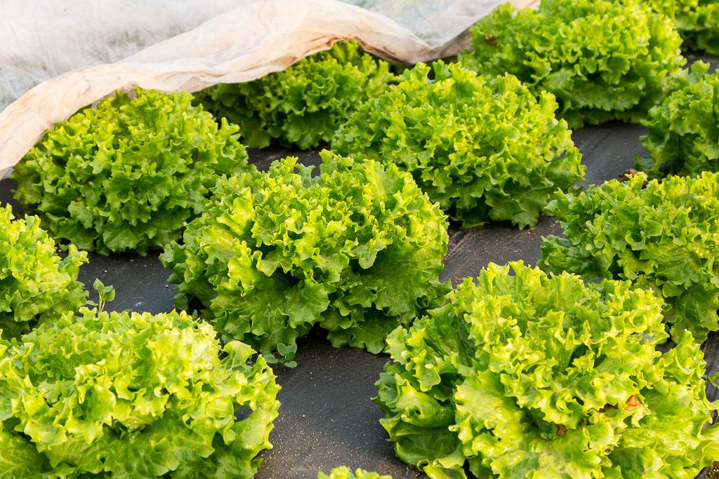 02 - Salades