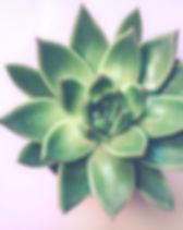 green-succulent-plant-1445417.jpg
