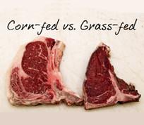 corn-fed-vs-grass-fed-holisticwellnessne