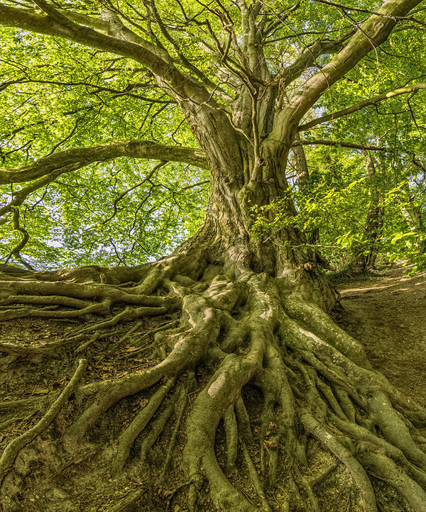 tree-3385957.jpg