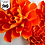 Thumbnail: SVG/PDF Paper Marigold Collection