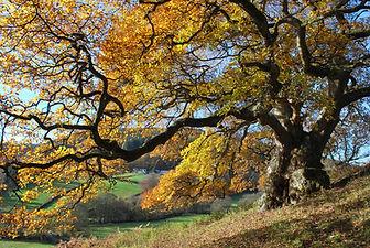autumnal tree.jpg