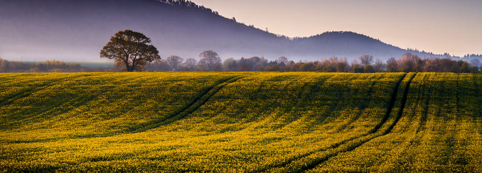 (c) Andy Udall: Early morning Light (highly commended)
