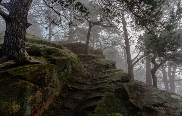 (c) Alan Gwilt: Foggy Morning up High rock (highly commended)