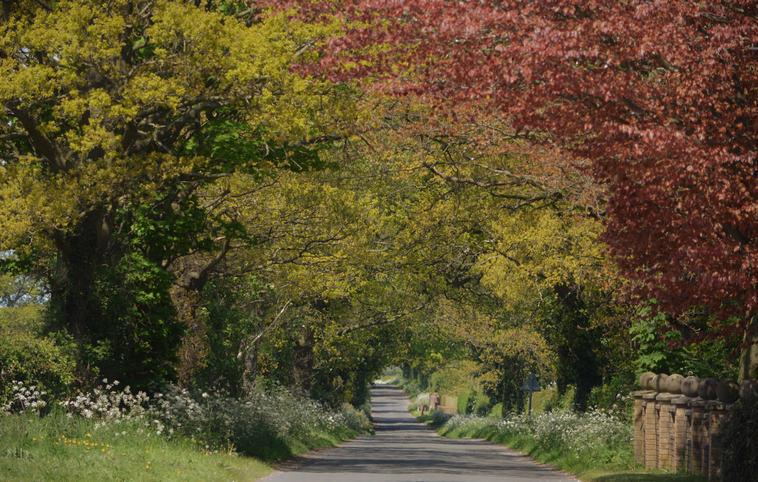 (c) Alastair Reid: Spring (highly commended)