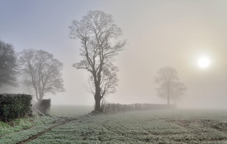 (c) Chris Lewis: Trees in the Mist (Selby Martin Prize)