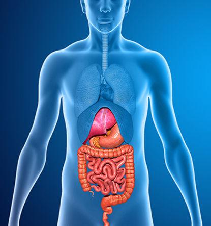 תזונה לאחר ניתוח במערכת העיכול