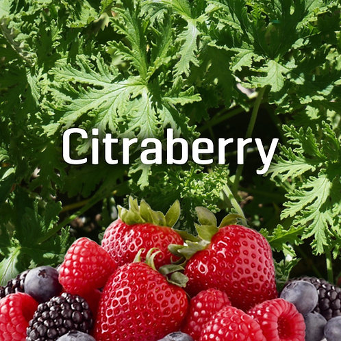 Citraberry Jar Candle