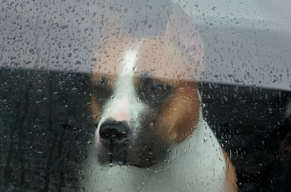 dog left in car.JPG