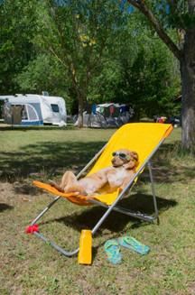 Dog resting.JPG