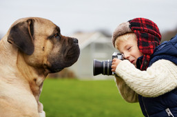 Dog being photographed.JPG