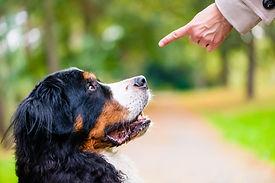Dog commands.JPG