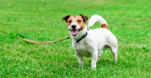 Dog on tether.JPG