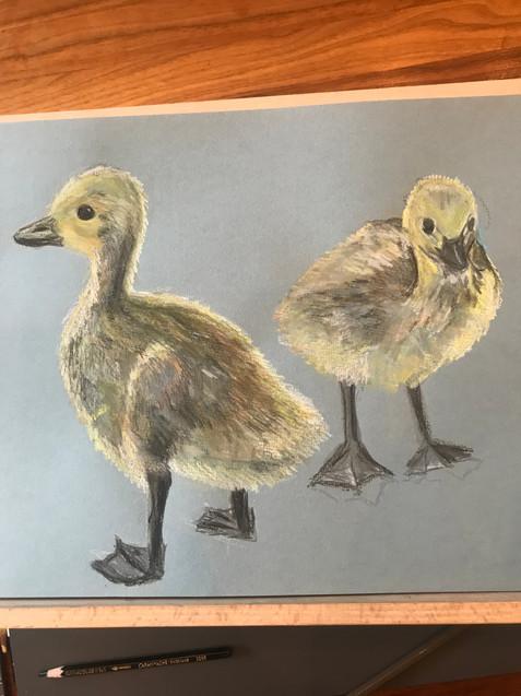 Dulwich Goslings