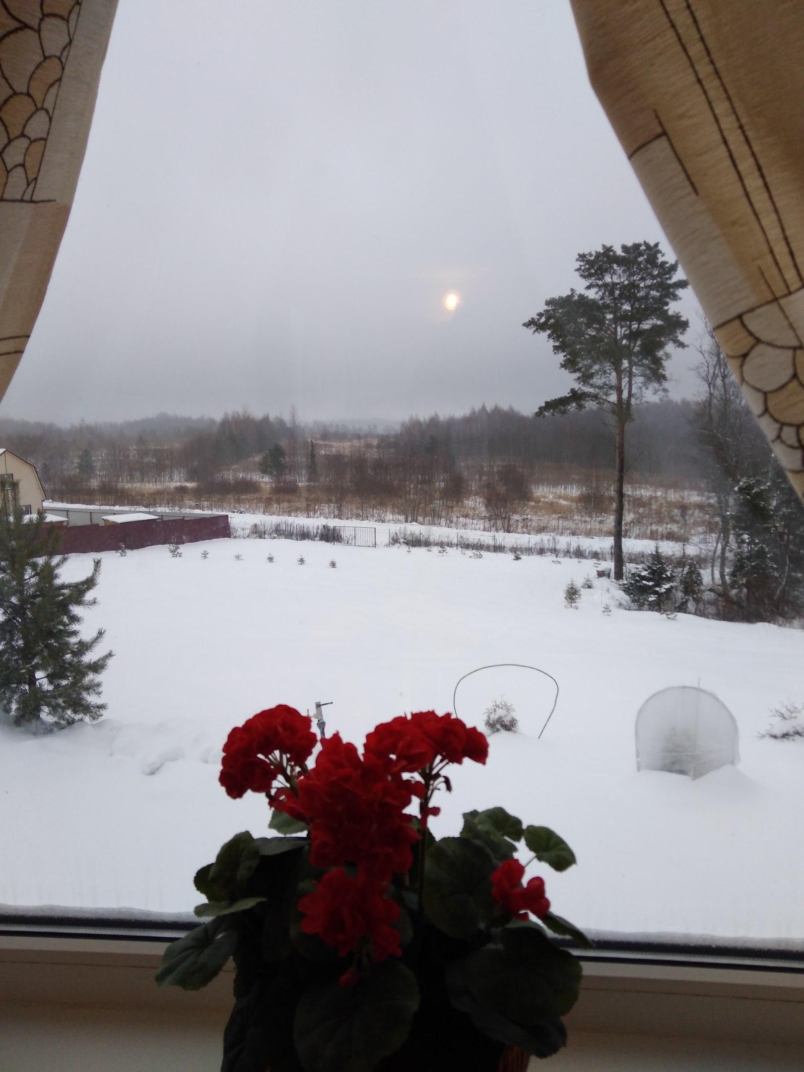 вид из окна гостевого домика
